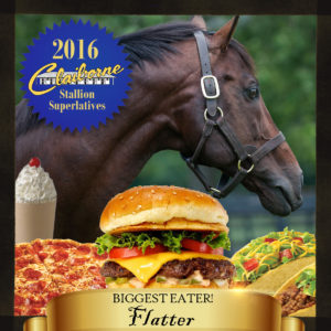 2016-05-27_Stallion_Superlatives_Flatter