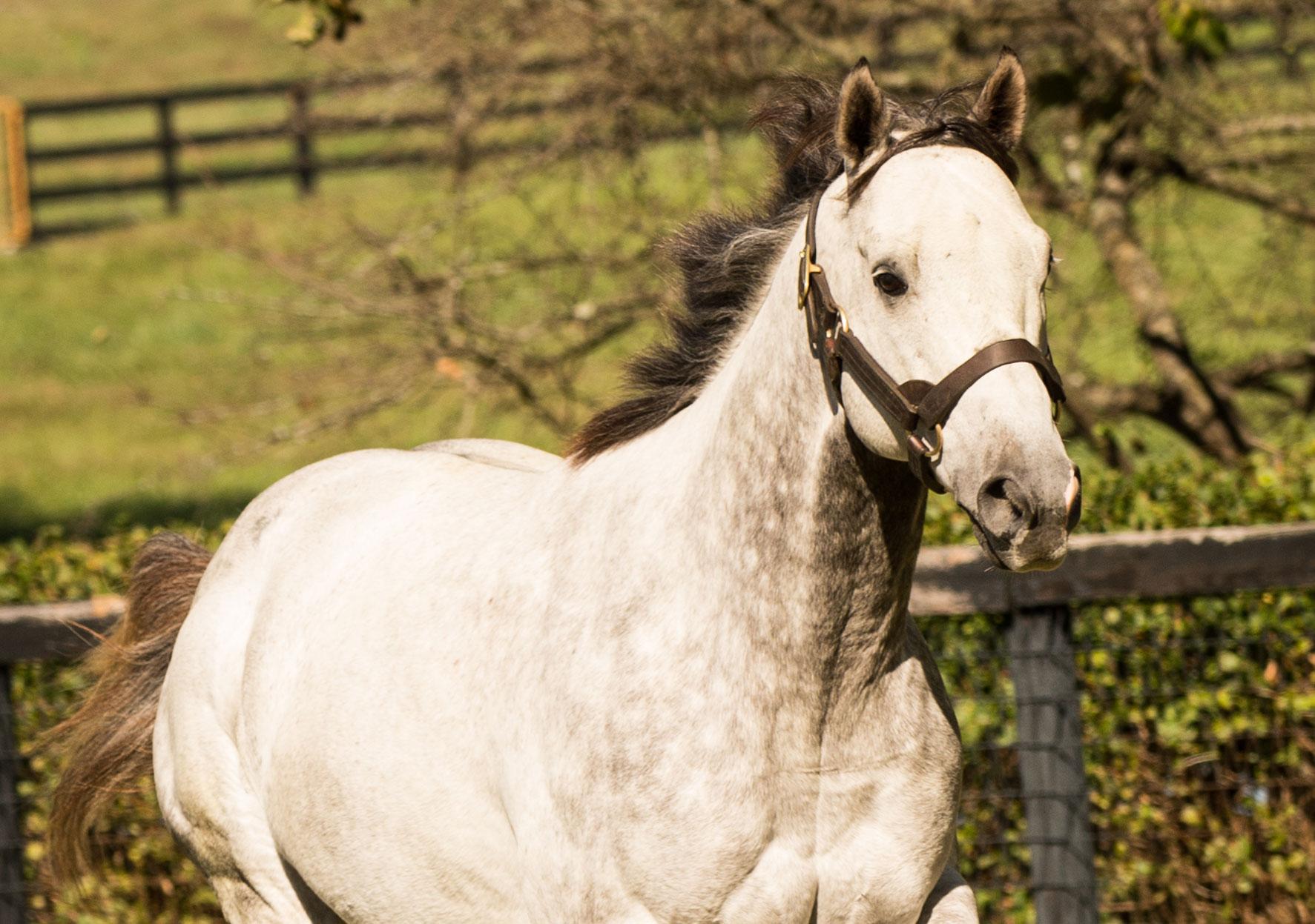 Stallion Spotlight Ironicus Claiborne